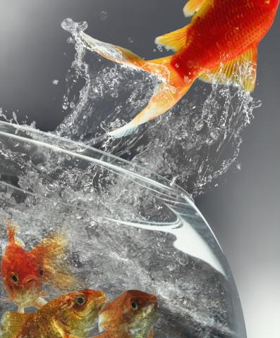 Mémoire de poisson rouge